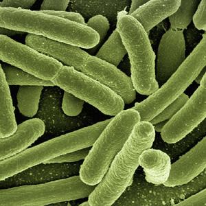 Darwin-evolution-antibioresistance
