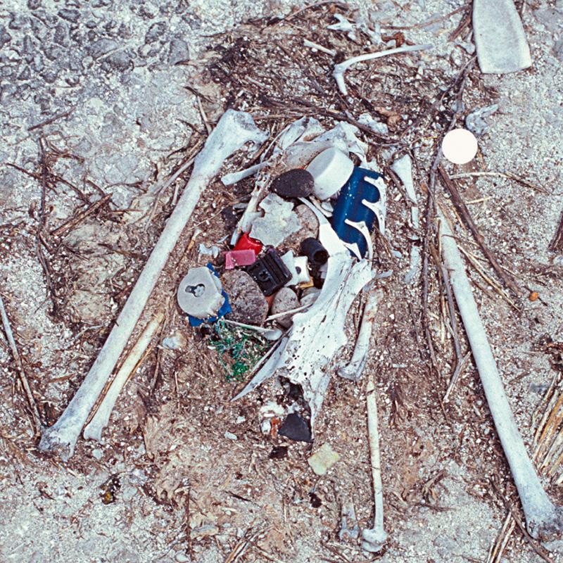 Cat albatros est mort d'avoir mangé du plastique