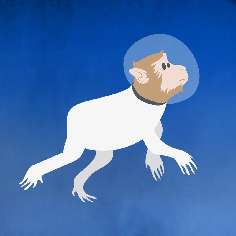 1948: le macaque Albert 1er est envoyé dans l'espace (USA)