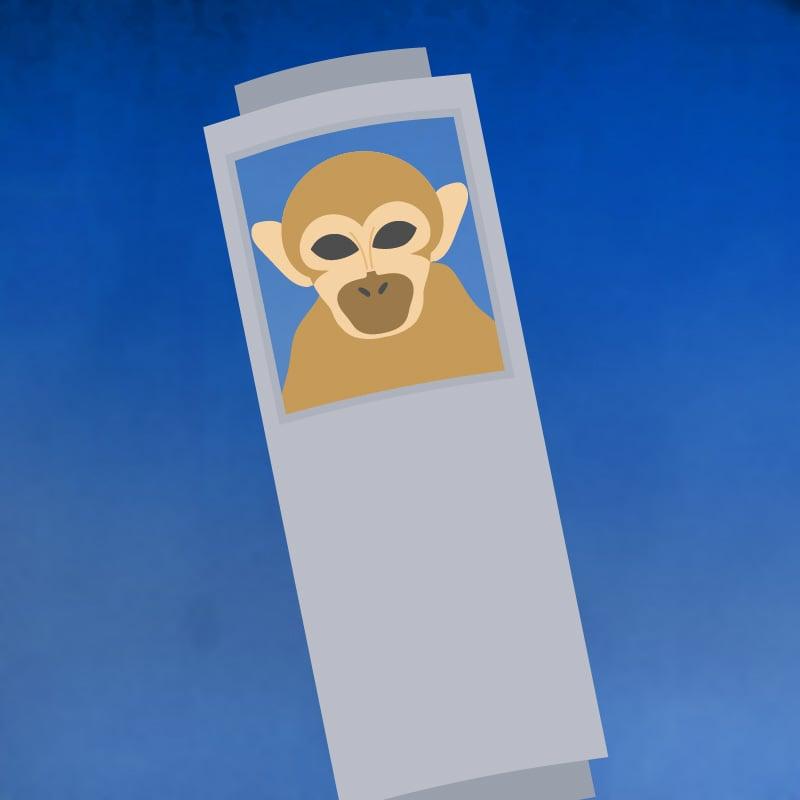 1957: Miss Baker, un singe écureuil, survit au voyage dans l'espace (USA)