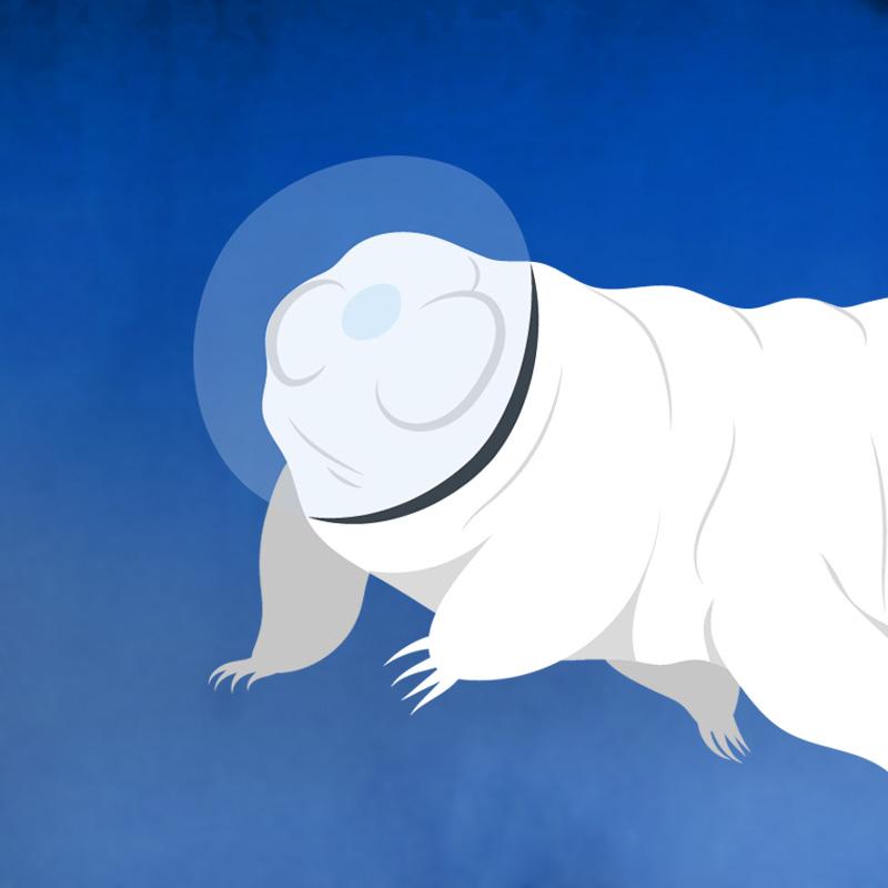 2007: des tardigrades survivent 10 jours dans le vide spatial!