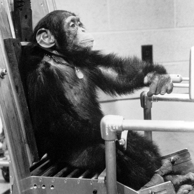Le chimpanzé Ham, à l'entraînement (USA)