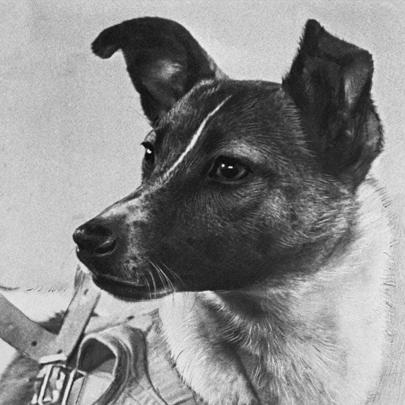 Laïka était une chienne trouvé errante dans les rues de Moscou