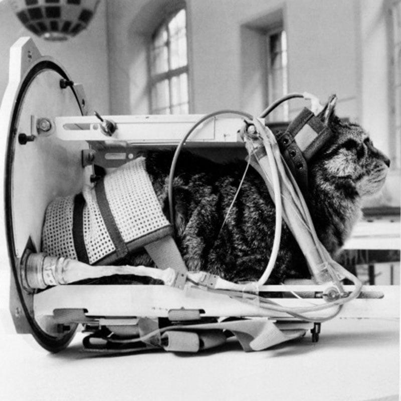 1963: Félicette est le premier chat envoyé dans l'espace (France)