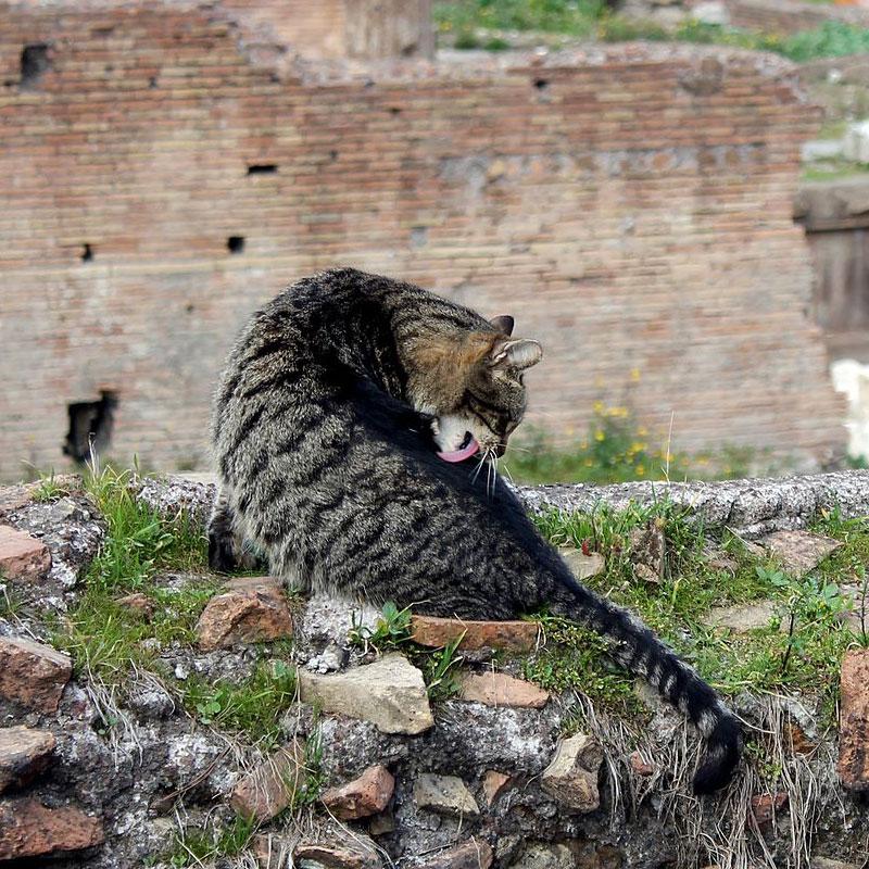 À Rome, une loi protège les chats, qui sont considérés comme des citoyens.
