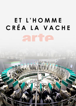 documentaire-vache-ribot