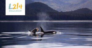 John Hargrove: de SeaWorld à la défense des animaux
