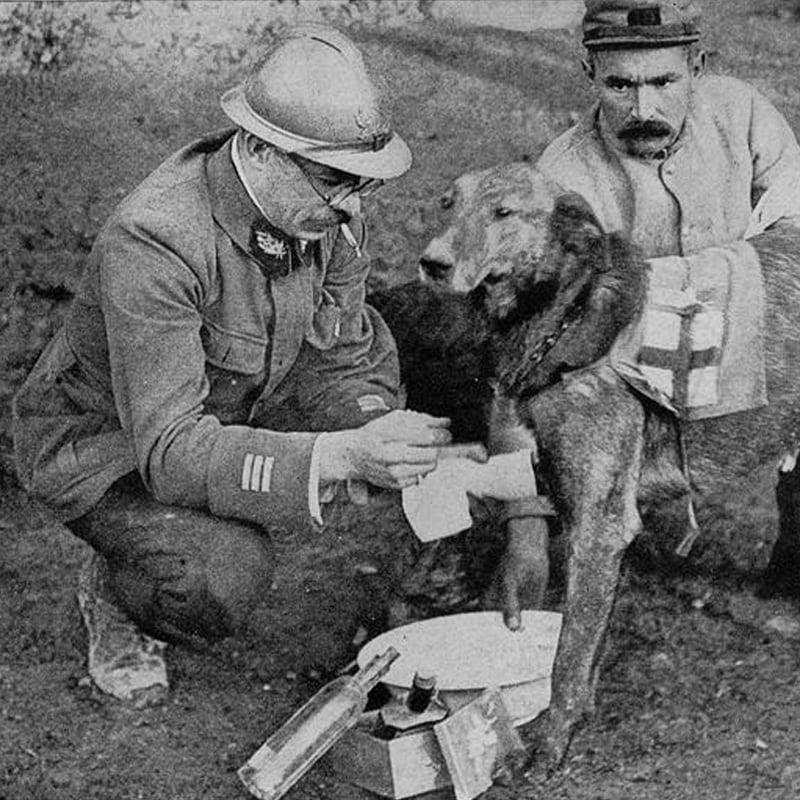 14-18, les animaux dans la Grande Guerre | L214 Éducation