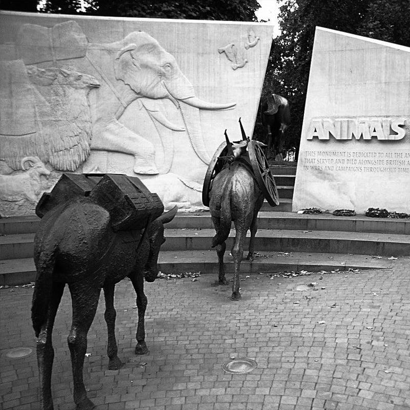 Les mémorial des animaux de guerre à Londres (2004)