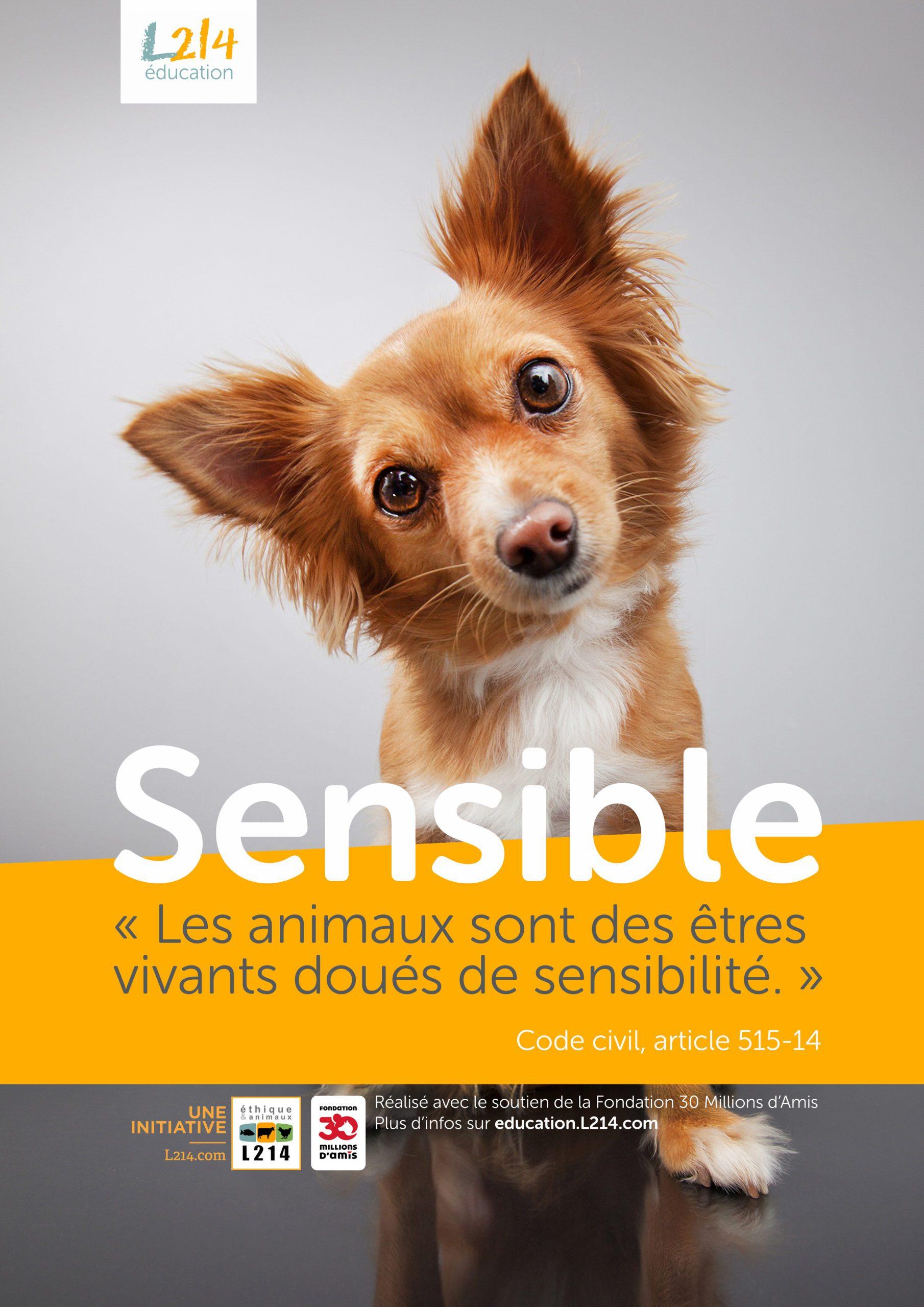 "Poster ""sensible"" / Chien"