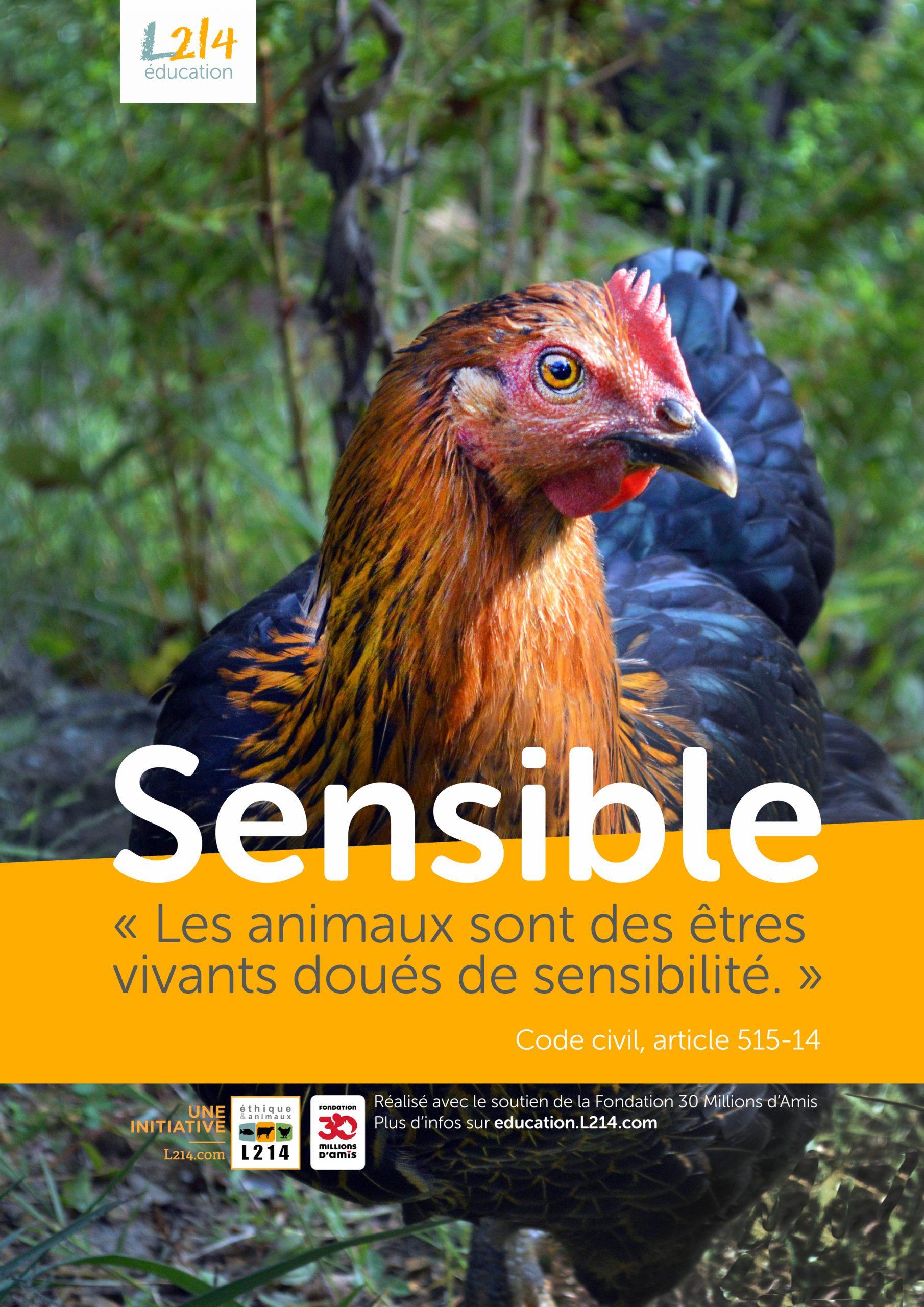 Poster  «Sensible» n°3