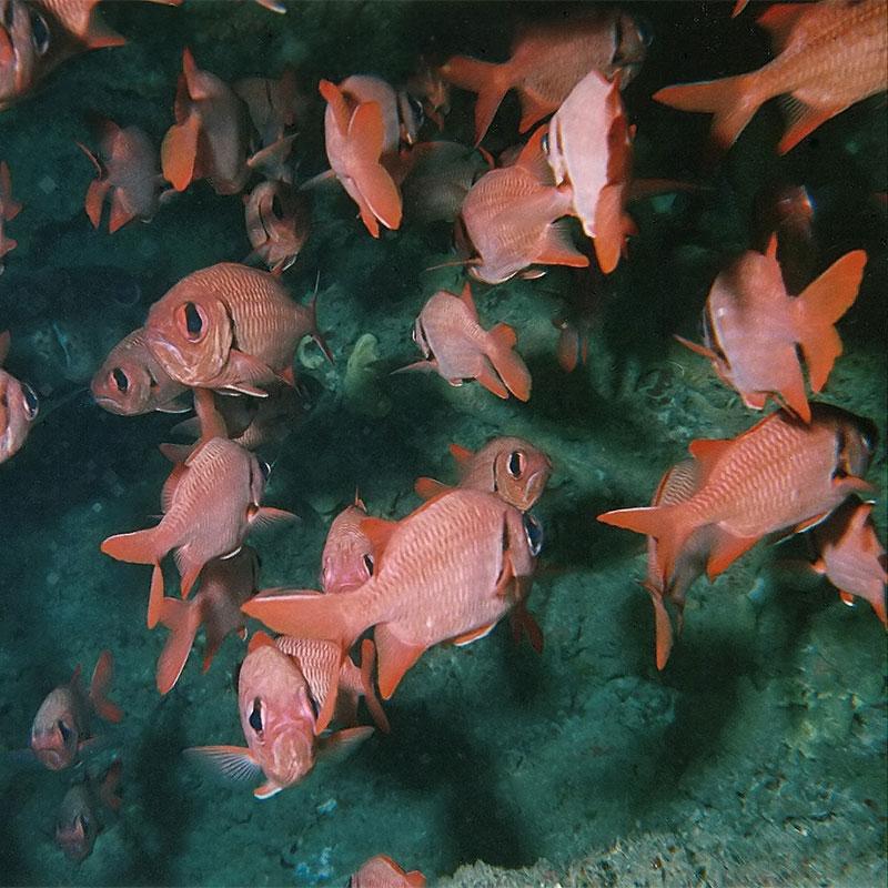En se déplaçant en bancs, les poissons sont plus en sécurité!