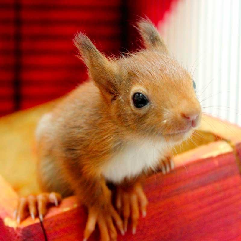 ...mais les mammifères, comme ce petit écureuil, sont aussi les bienvenus!