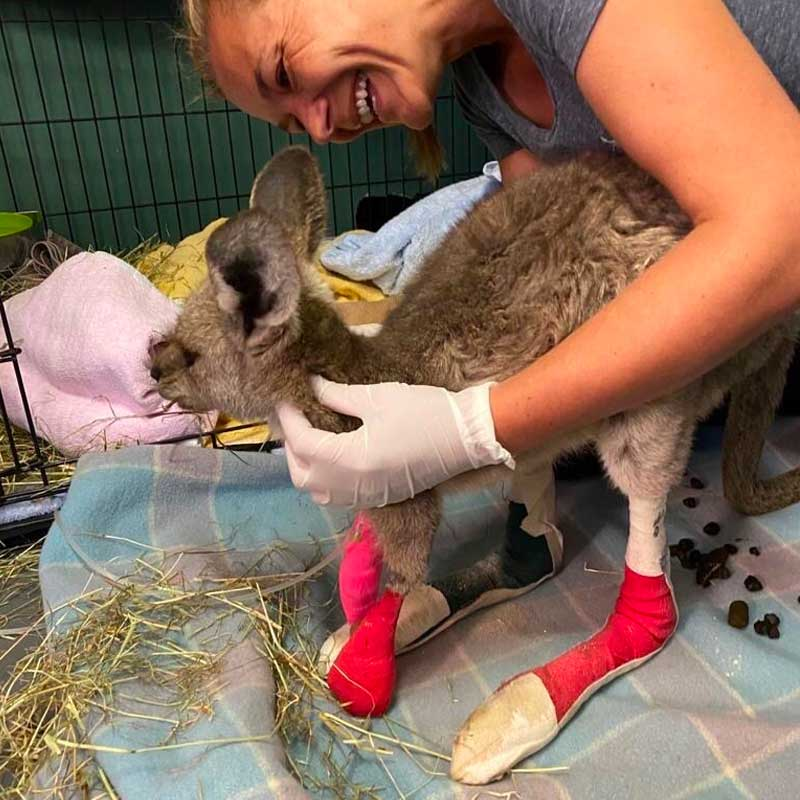 Une fois ses brûlures soignées, ce wallaby bondira vers la liberté!