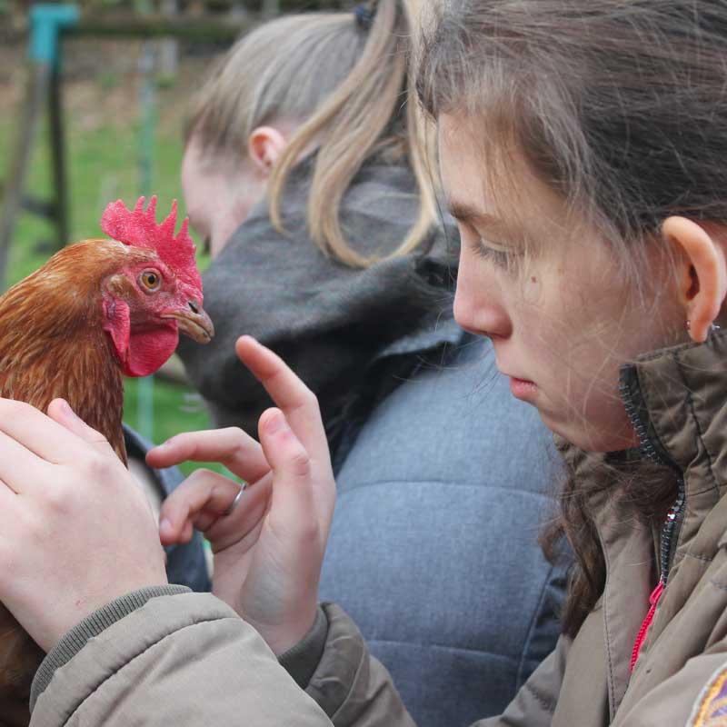 Olive, la poule, a été sauvée d'un élevage intensif.