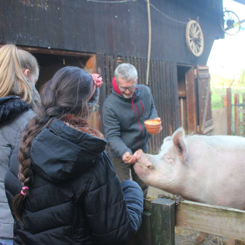 Henni le cochon est grognon: on reste derrière la barrière...