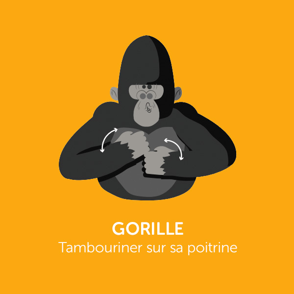 Parle comme Koko: GORILLE
