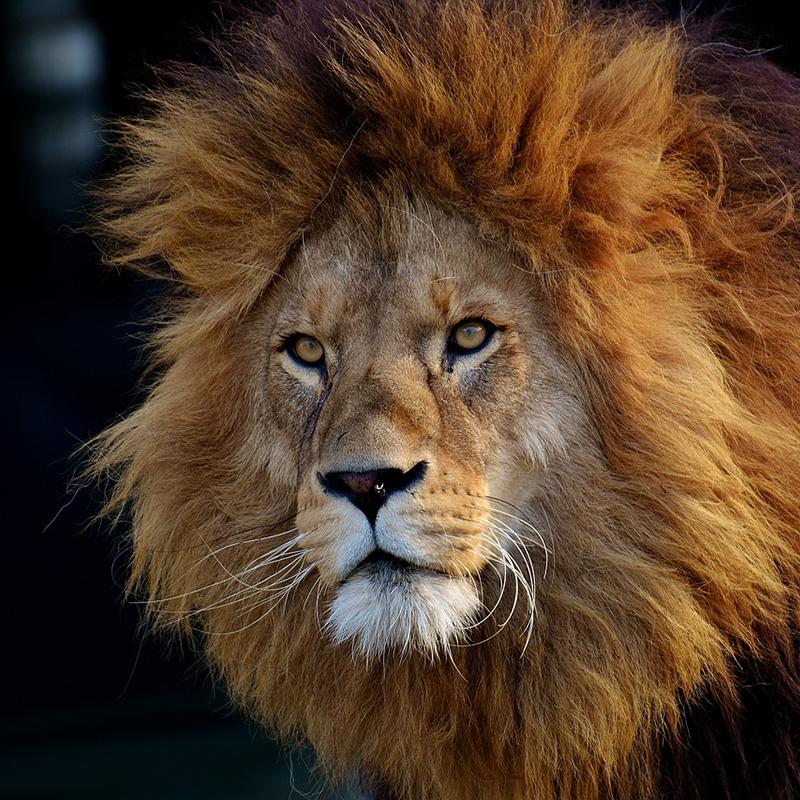 Les animaux sauvages ne sont plus autorisés dans les cirques