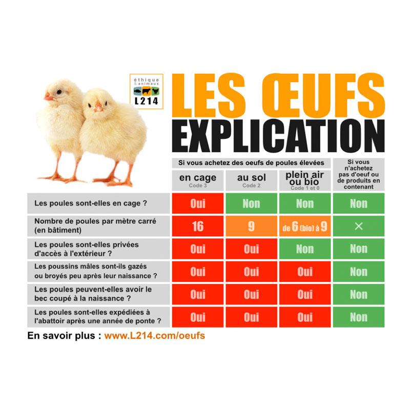Décrypter les modes d'élevage des poules grâce au code sur les oeufs
