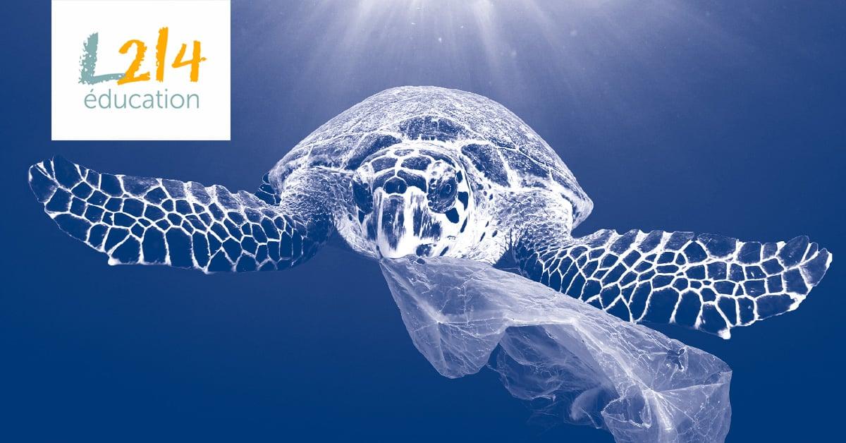 DOSSIER #2: Un océan de plastique