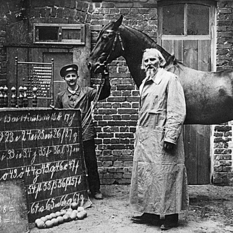 Hans le malin, un cheval génial ! | L214 Éducation
