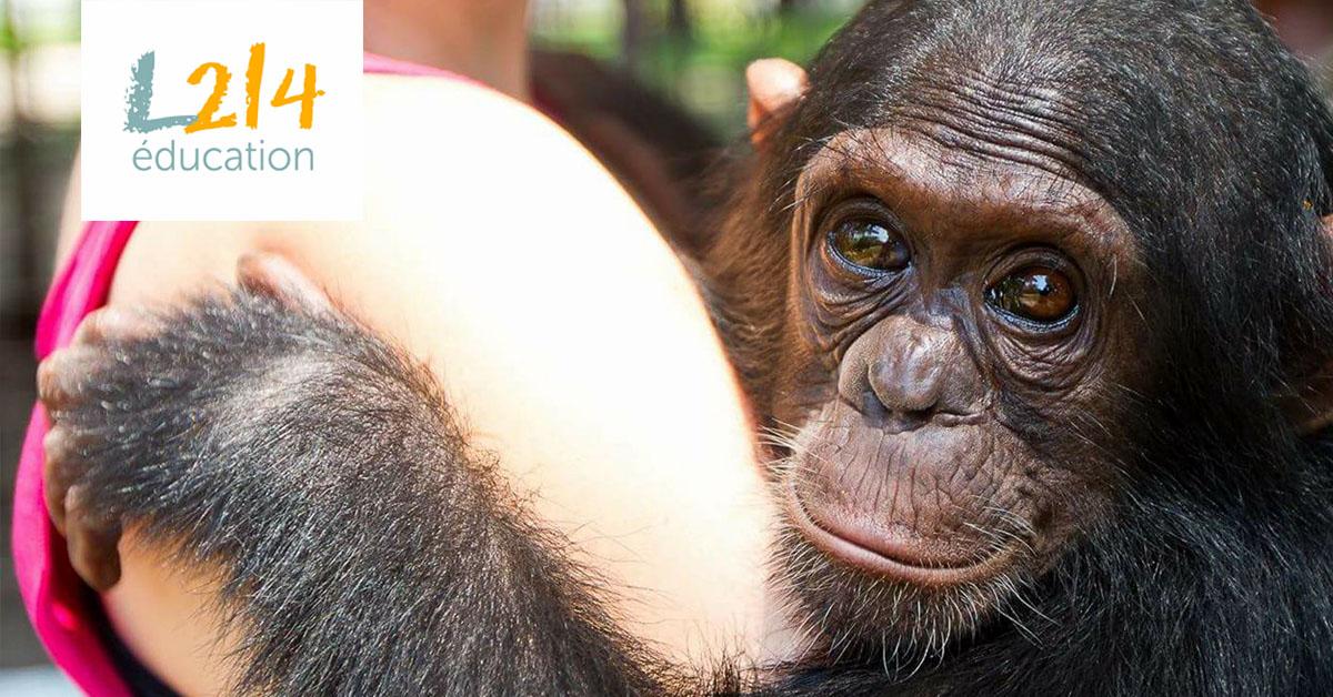 MÉTIER: Plus tard je voudrais être... primatologue