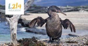 Des oiseaux très terre à terre