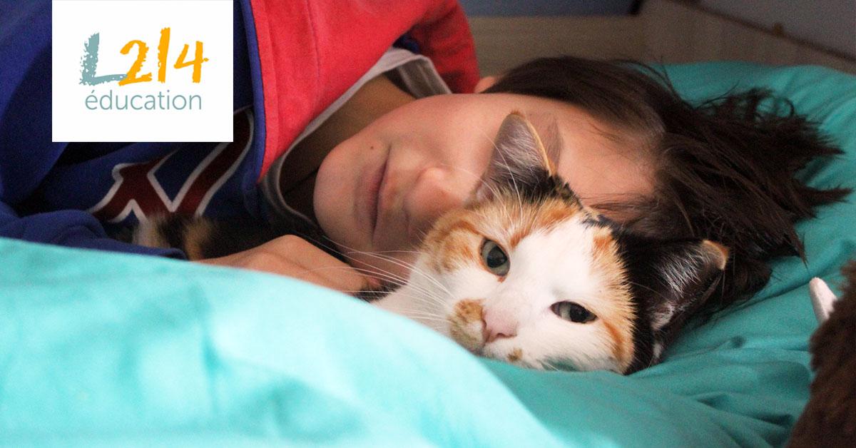 Romain, famille d'accueil pour chats
