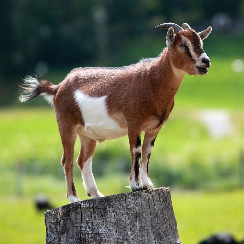 Les éthologues en découvrent toujours plus sur ces animaux fascinants.