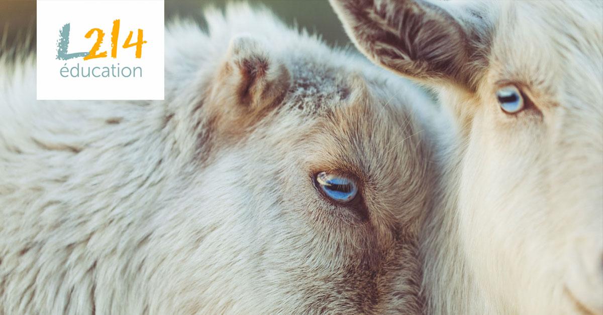 Éthique animale: éloge de la sensibilité