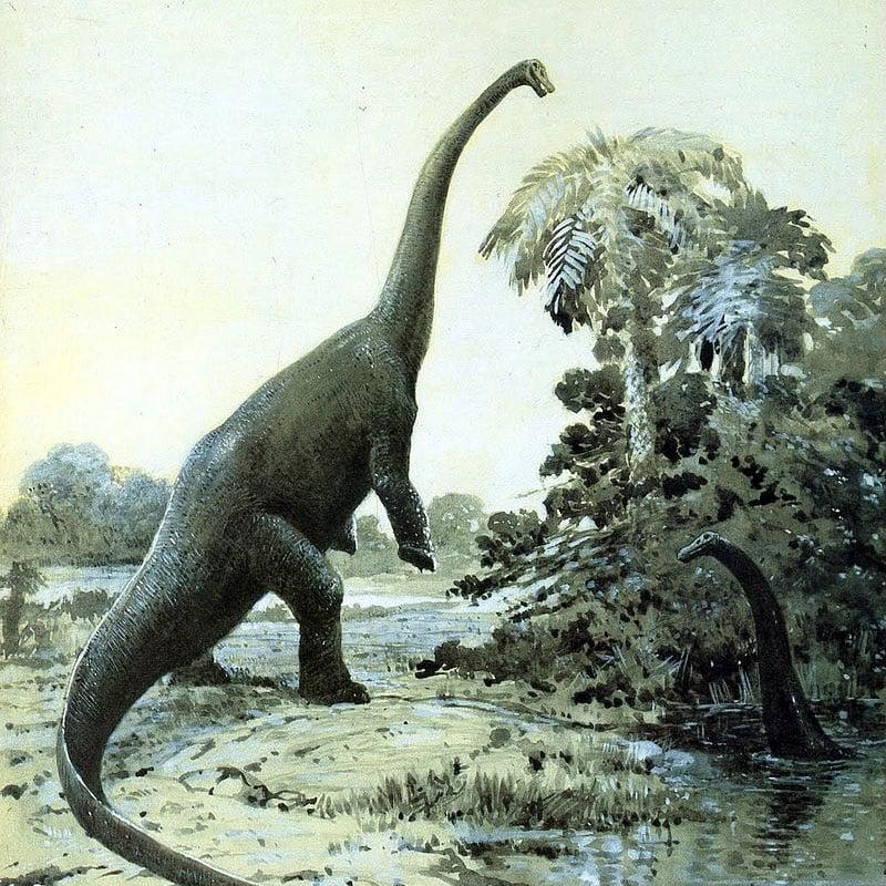 Des diplodocus, dessinés par C. Knight