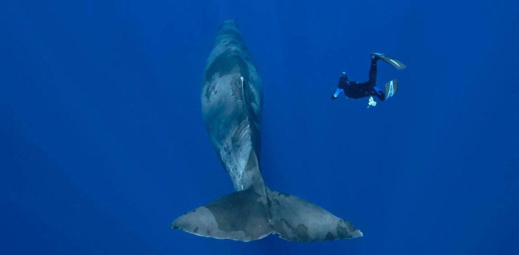 Rencontre entre un plongeur et un cachalot