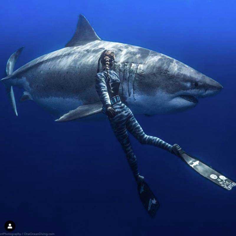 Plongeuse et requin