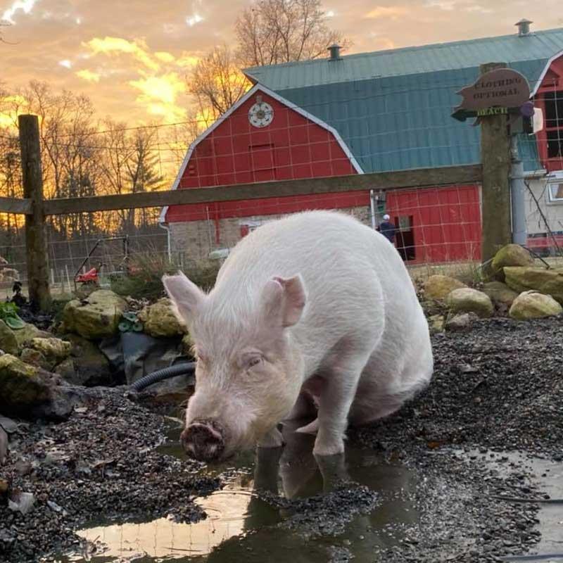 Esther adore la boue!