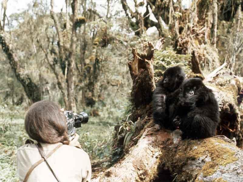 Dian Fossey avec Coco et Pucker