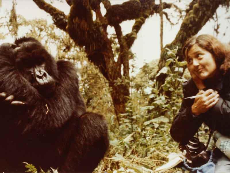 Dian Fossey et Digit