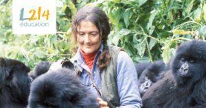 Dian Fossey et les gorilles