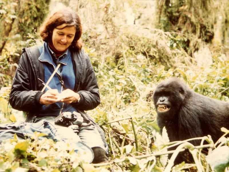 Dian Fossey en observation
