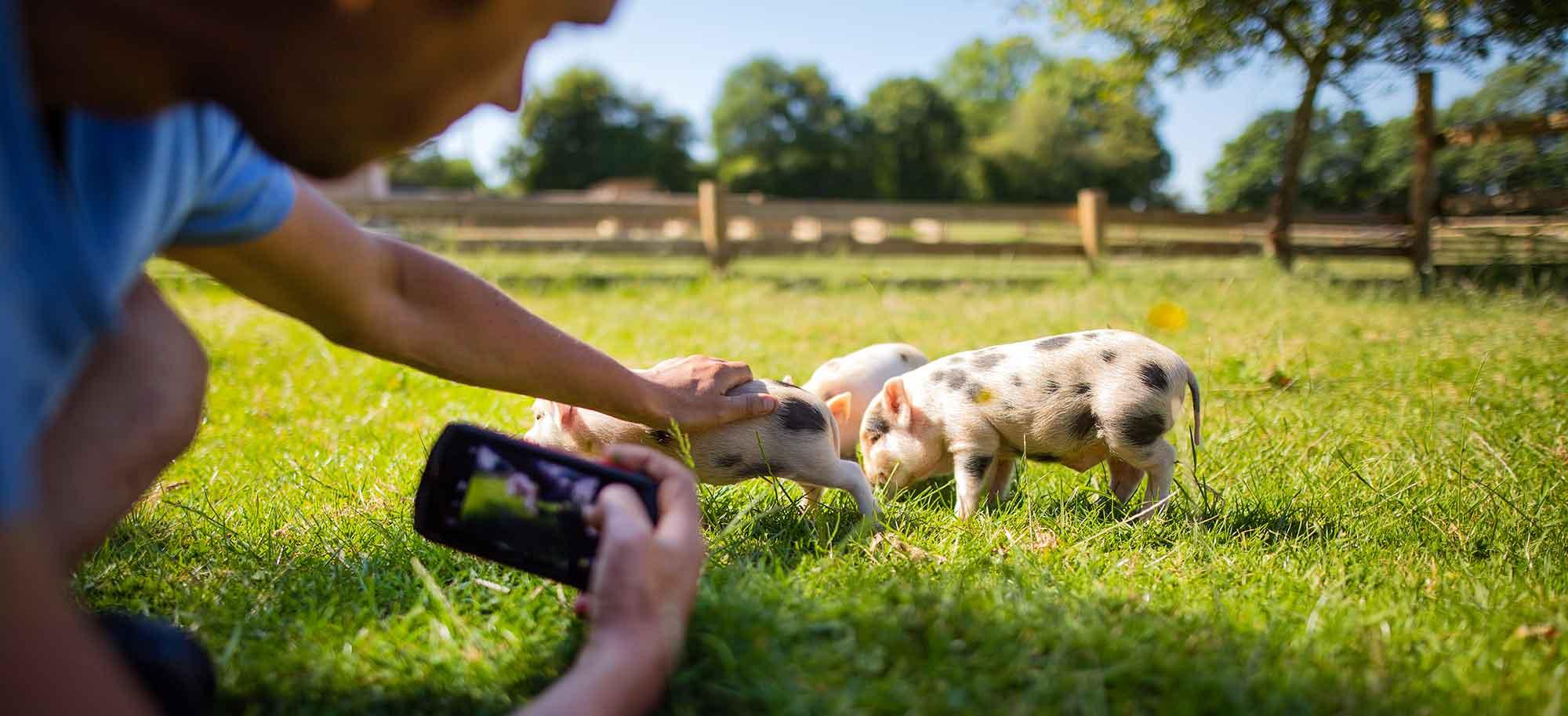 Animation scolaire visite virtuelle refuge pour animaux