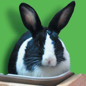 Irène le lapin, une seconde chance après le laboratoire