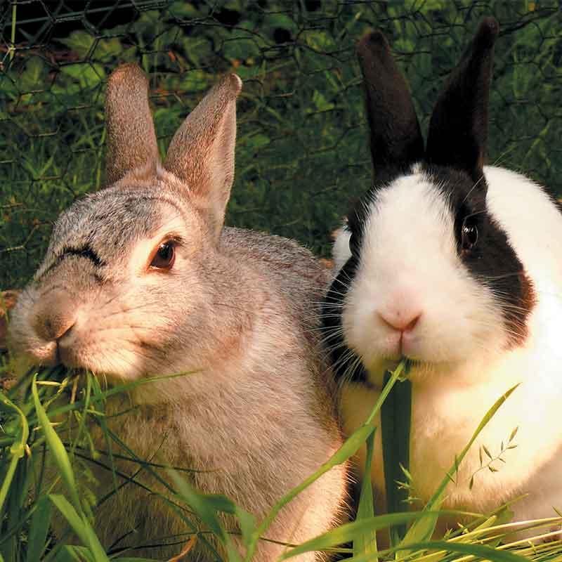 Mode de vie des lapins