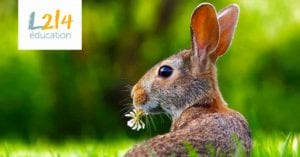 une vie de lapin