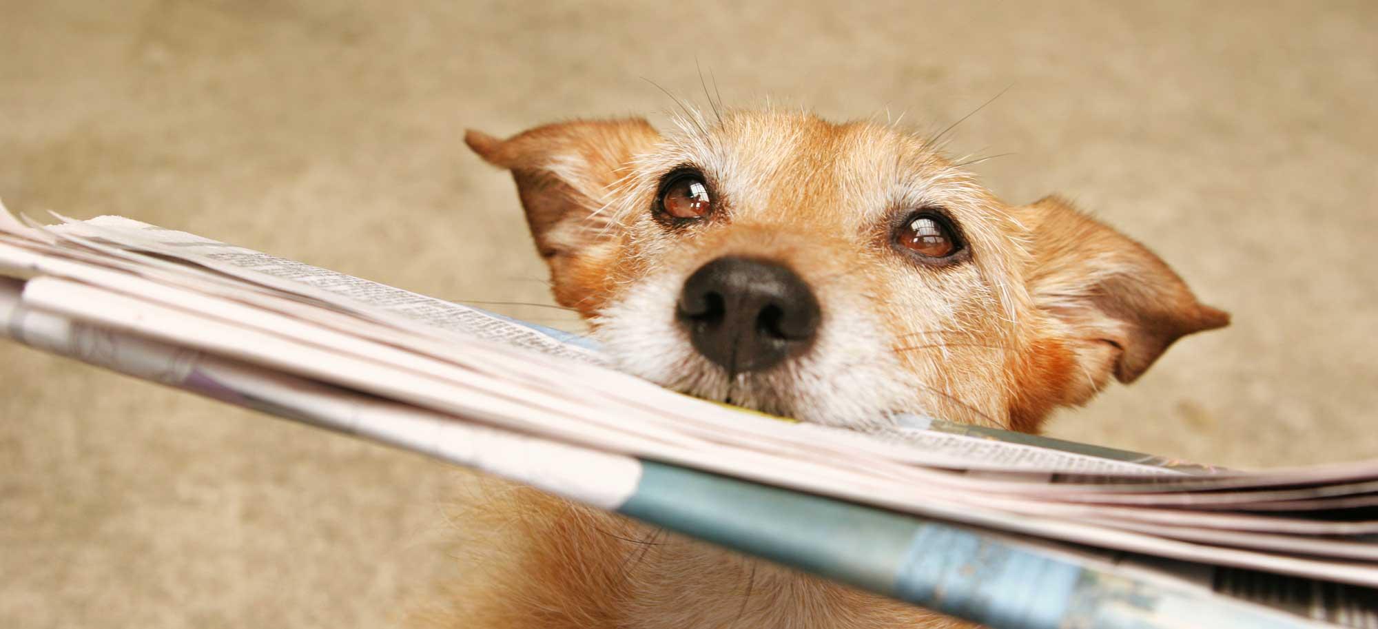 blog articles actualités défense des animaux