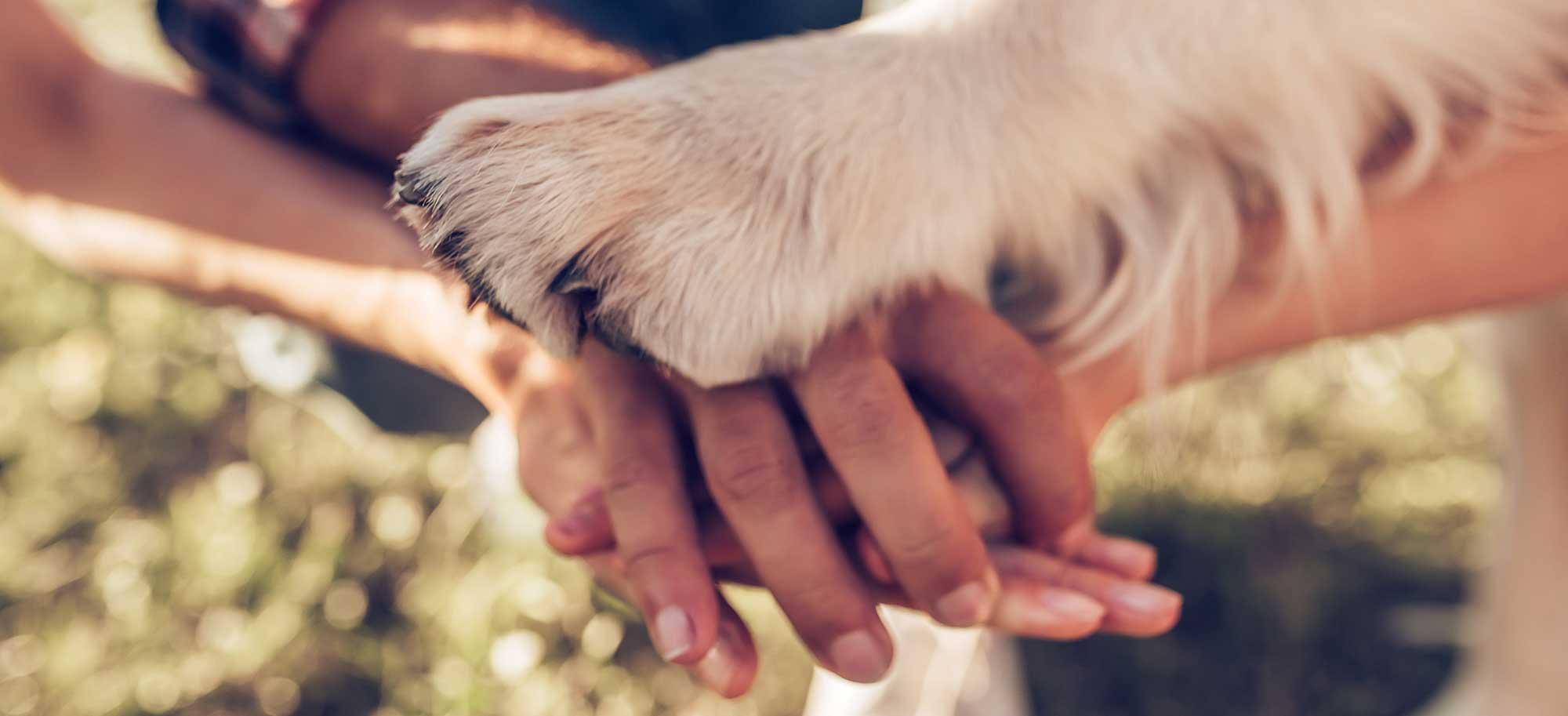 L'éducation à l'éthique animale à