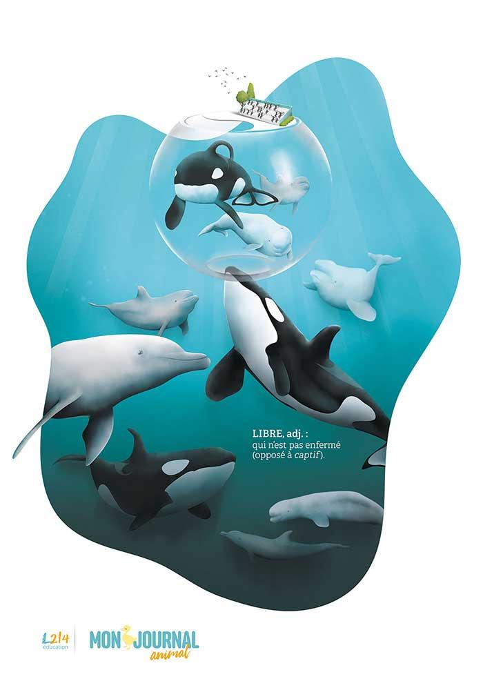 Poster Mon-journal-animal #5 / La captivité des mammifères marins