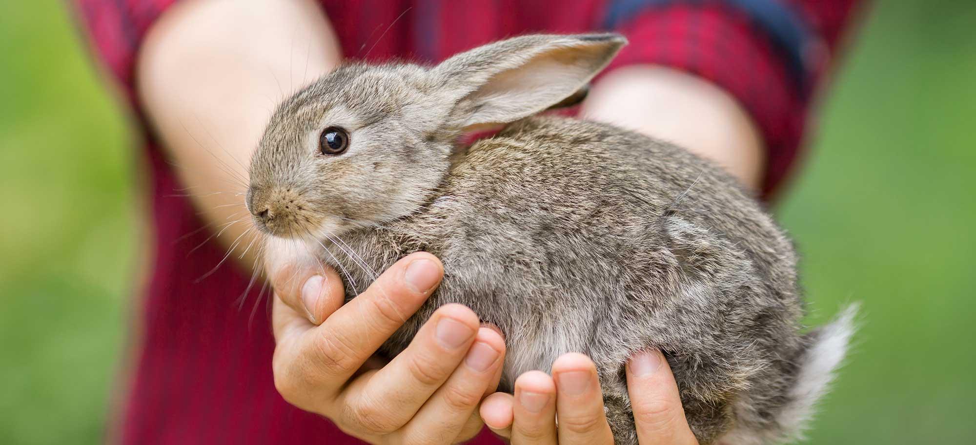 L'éducation à l'éthique animale à l'école, la défense des animaux en classe