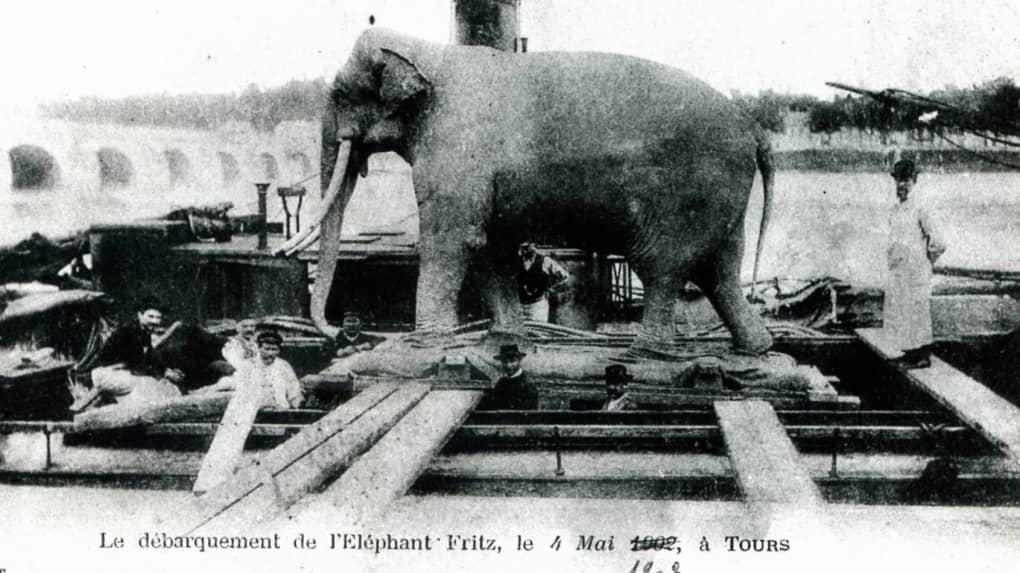 Arrivée de Fritz l'éléphant à Tours